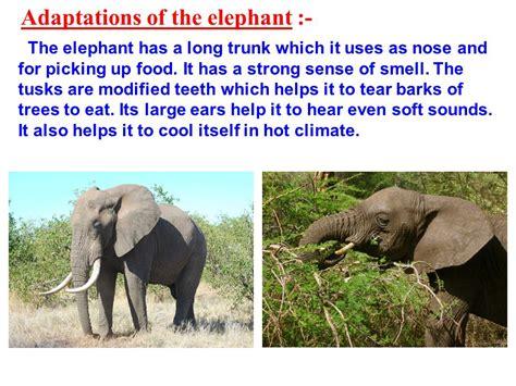 chapter  weather climate  adaptations  animals