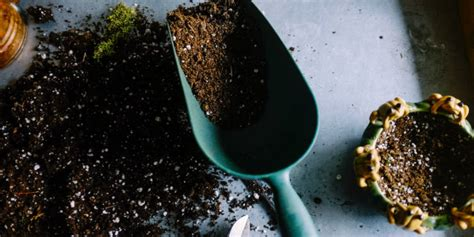 We all know that we need to add fertilizer or compost to the soil for enriching the nutrient content of the soil. Are Coffee Grounds Good For Roses? Gardening Tips For 2021