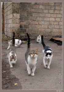 ally cats back alley cats