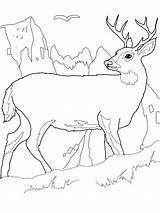 Deer Coloring Pages Printable sketch template