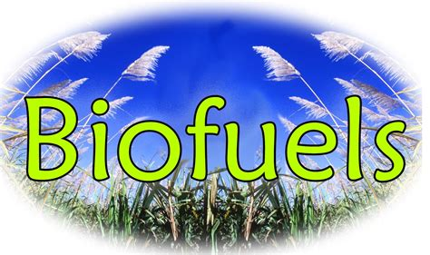 'Biofuels Worse Than Petrol In Causing Global Warming ...