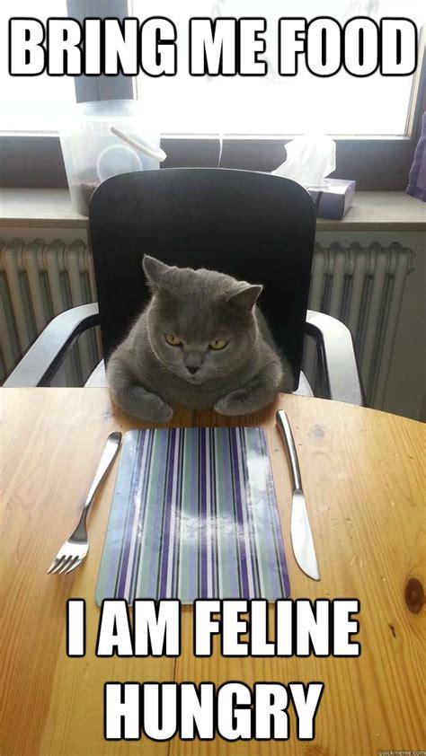 Bring Me Food Meme - bring me food i am feline hungry misc quickmeme