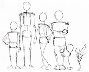 Human Anatomy Fundamentals  Advanced Body Proportions