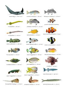 Fish Species Identification