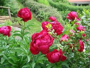 Blumen Für Garten : mein garten blumen ein tolles beispiel f r kreativen gartenbau holz ~ Frokenaadalensverden.com Haus und Dekorationen