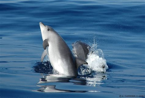 gulli cuisine rencontre dauphin marineland avis nouméa