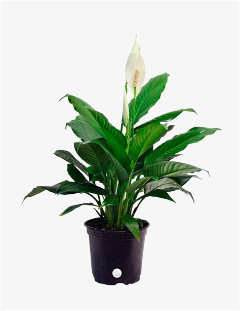 the 10 best indoor plants for every kind of person gear patrol