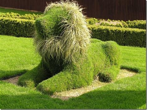 Best Funny Topiary Lion With Grass Mane If You Make A