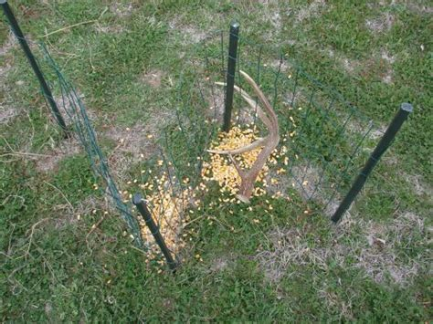 trap shed shed traps page 2 huntingnet forums