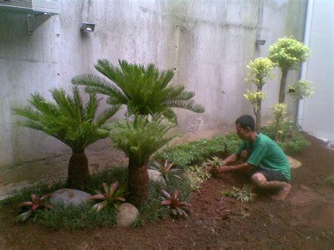 jual jual pohon palm sikas tukang taman tanaman hias