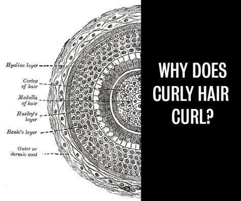 Why Do Hair by Curls Week Why Does Curly Hair Curl Hair
