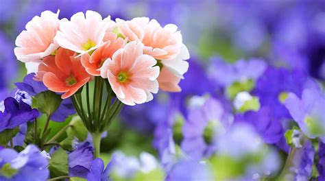Free Flower Prints To Download
