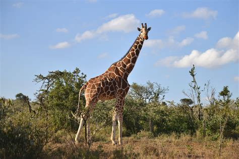Woman Called 'White American Savage' for Dead Giraffe ...