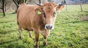 Fleisch Auf Rechnung Bestellen : blog nahgenuss fleisch artgerechte tierhaltung ~ Themetempest.com Abrechnung