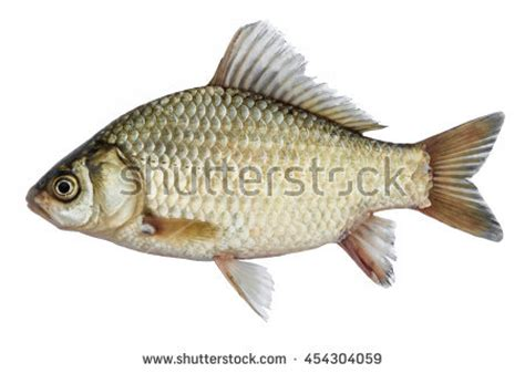 Fish Stock Images, Royaltyfree Images & Vectors