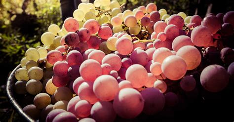 Learn The Different Wines Grapes And Varietals Wine 101