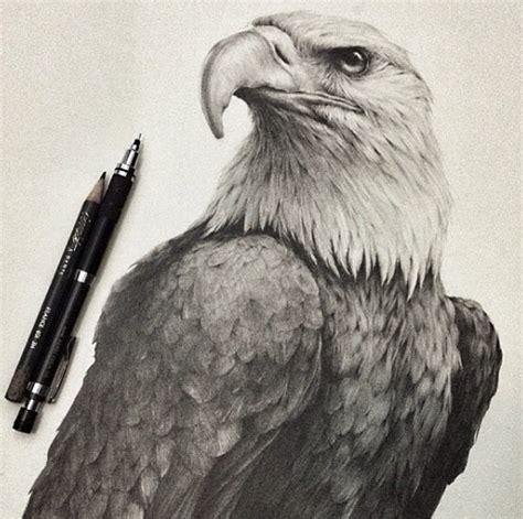 animal drawings  pencil