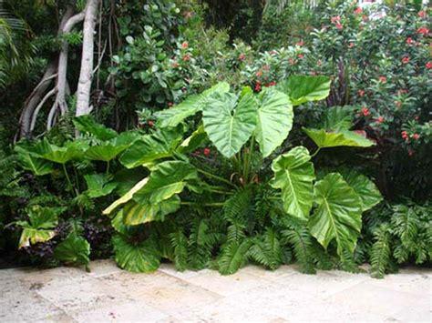 small tropical plants small garden design london small garden ideas urban tropics