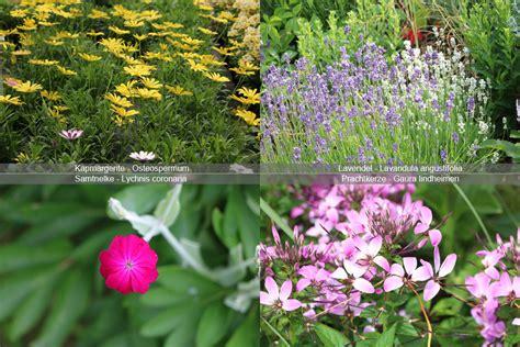 pflanzen die viel sonne vertragen die besten ideen f 252 r k 252 belpflanzen terrasse volle sonne
