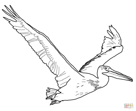 American White Pelican Coloring Page