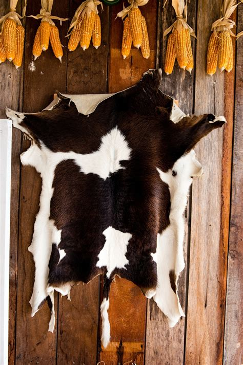 Cowhides International Reviews create a rustic look with cow hide rugs
