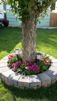 pin  raesharron allen  trees outdoors projects cheap landscaping ideas  front yard
