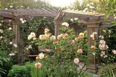 rosa apricot nectar photos design ideas remodel and decor lonny