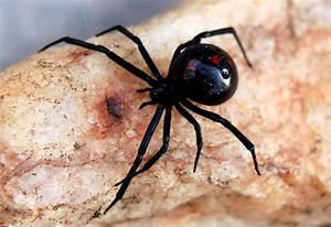 EduPic Spider Images