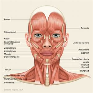 Jeff Searle  Muscles Of The Head And Neck In 2020