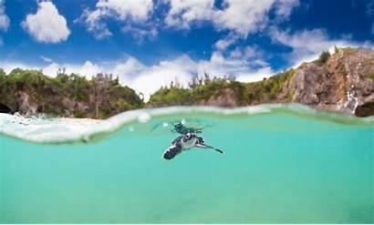 Turtle Turtles Sea Wallpapers Swimming Okinawa Cutest