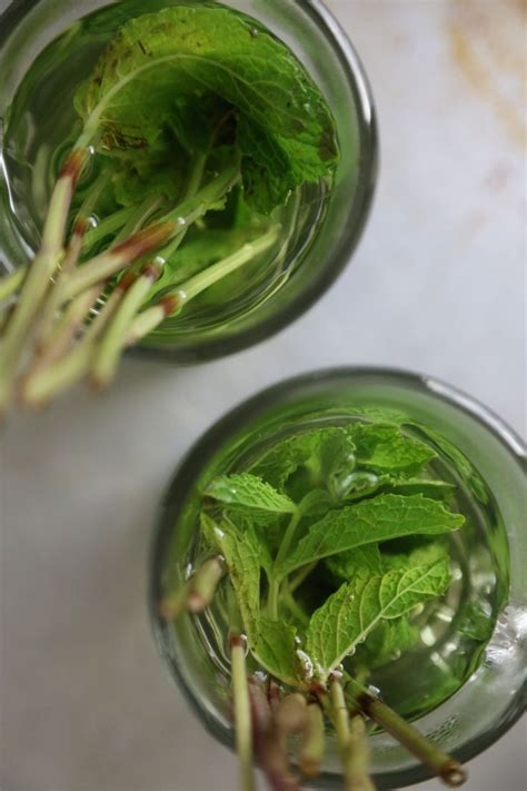 fresh mint recipe fresh mint tea recipe dishmaps