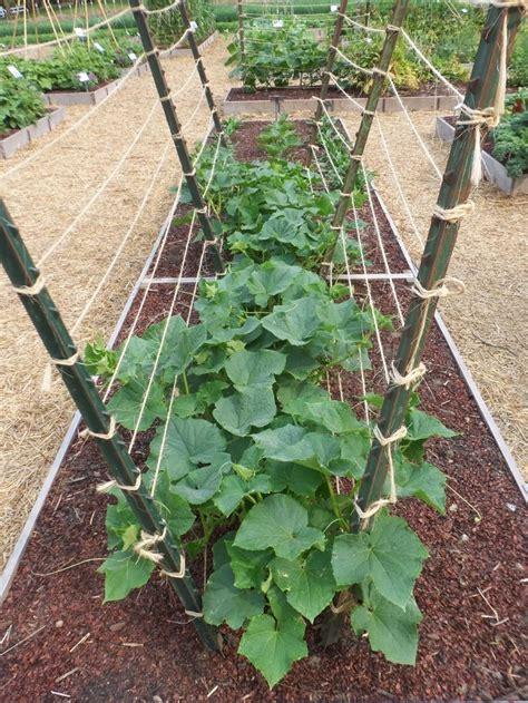 trellis for cucumbers garden trellis designs woodworking projects plans