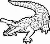 Alligator Coloring Printable sketch template
