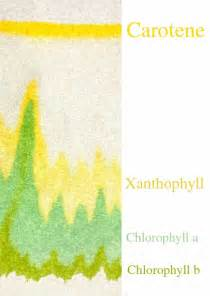 The gallery for --> Paper Chromatography Lab Spinach