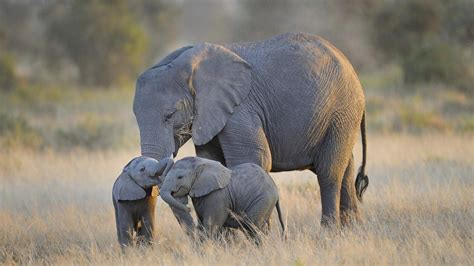 Two Elephant Baby Playing Wallpaper Hd Wallpapers