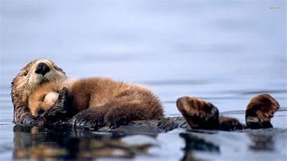 Animals Beaver Otter Wallpapers Sea Animal Pup