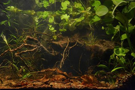 la nature  son incarnation dans  aquarium realites