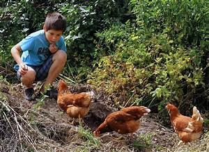 Deko Hühner Für Den Garten : h hner entwurmen ~ Whattoseeinmadrid.com Haus und Dekorationen