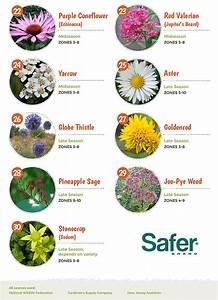 Top 30 Plants That Attract Pollinators
