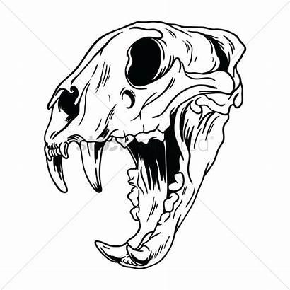 Skull Drawing Clipart Dog Tiger Vector Drawings