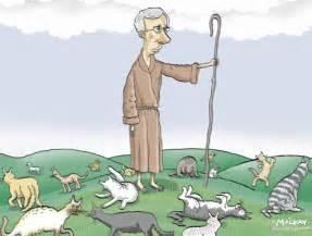 cat herder cameron shorter memoirs of a cat herder coordinating