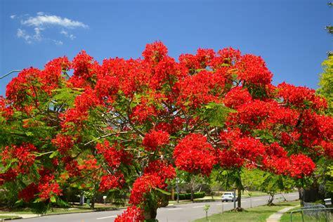 flowering trees helsie s happenings november 2012