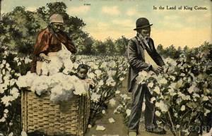 King Of Cotton : king cotton driverlayer search engine ~ Nature-et-papiers.com Idées de Décoration