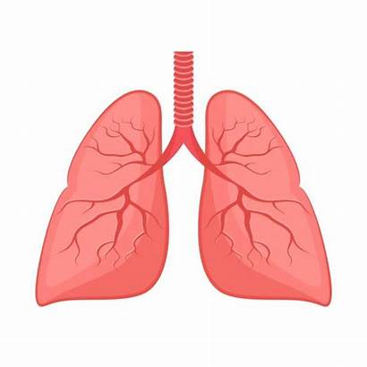 Lung Lungs Clip Vector Tree Bronchial Winter