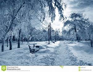 Winter park, scenery stock image. Image of fine, cool ...