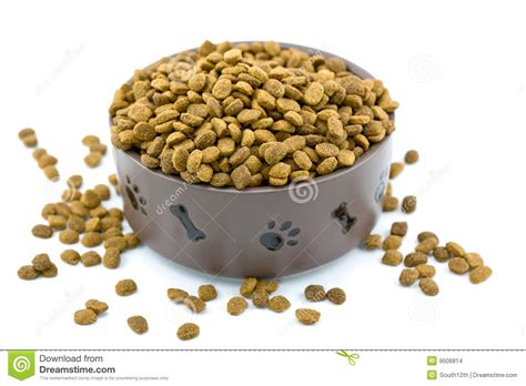overflowing dog food bowl stock photo image  dinner