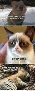 grumpy cat dead who is this grumpy cat you speak of memes