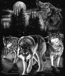 Drawn howling wolf wolf pack - Pencil and in color drawn ...