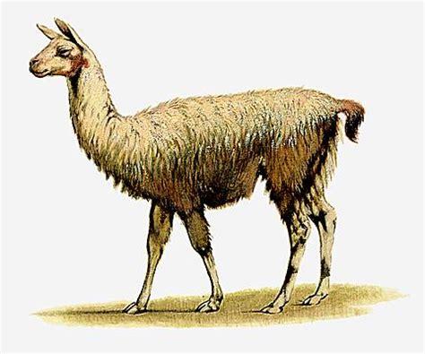 tendance peinture cuisine encyclopédie larousse en ligne lama