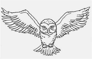 Cute Owl Pencil Drawing